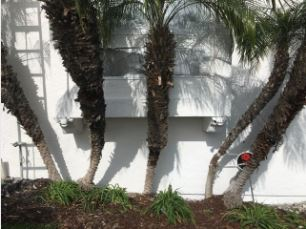 San Diego Stucco job