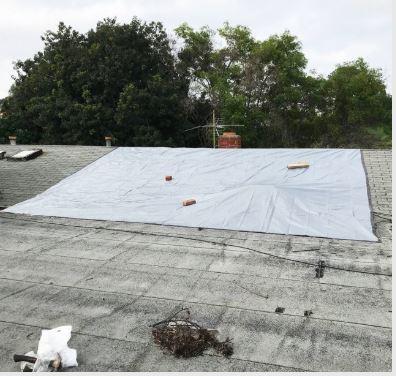 Roof Tarping Shingle Roof